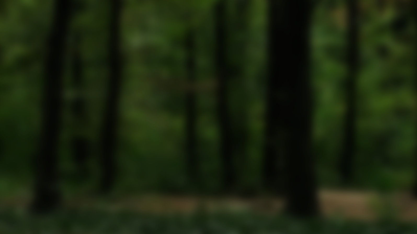 Blurred Forest background.jpg
