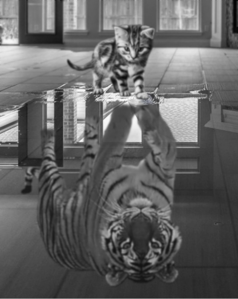 Kitten_tiger_reflection.jpg