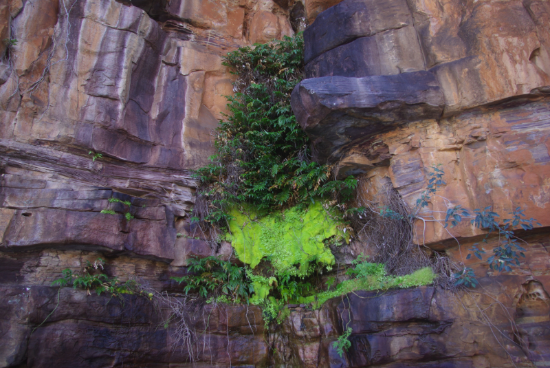 moss_curtain_on_cliff.png