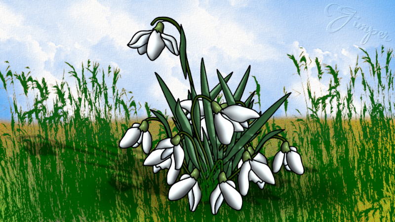 snowdrop.png